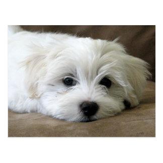 Puppy Eyes Postcard