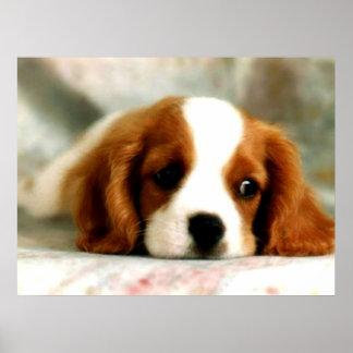 Puppy Eyes Poster
