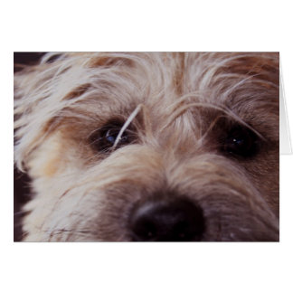 Puppy face close up card