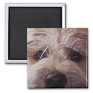 Puppy face close up magnet