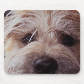 puppy face close up mouse pad