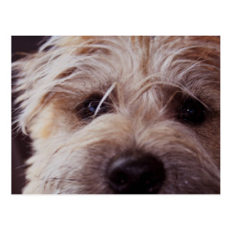 Puppy face close up postcard