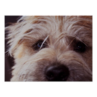 Puppy face close up Poster
