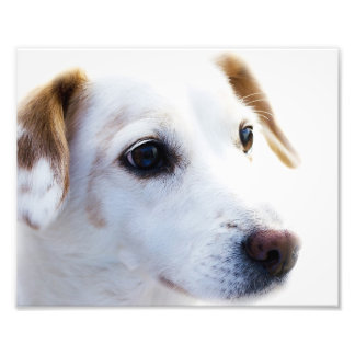 puppy face with cute expression photo print