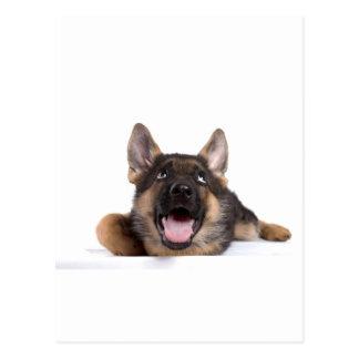 puppy german sheperd postcard