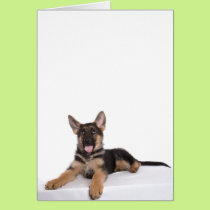 puppy German shepherd Card
