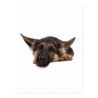 puppy German shepherd Postcard
