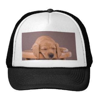 puppy gorra