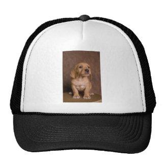 puppy mesh hats