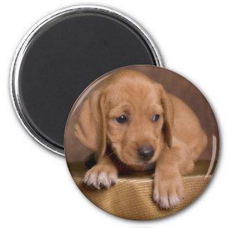 puppy imán redondo 5 cm