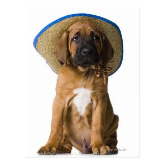puppy in a cowboy hat postcard