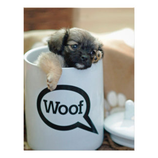"""Puppy in a Cup Woof Dog Brown Pet 8.5"""" X 11"""" Flyer"""