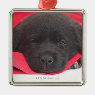 Puppy in blanket christmas tree ornament