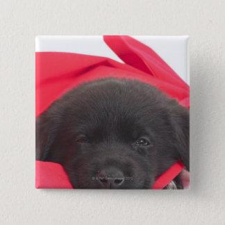 Puppy in blanket pinback button