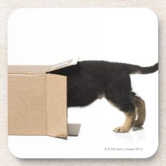 Puppy in cardboard box beverage coaster