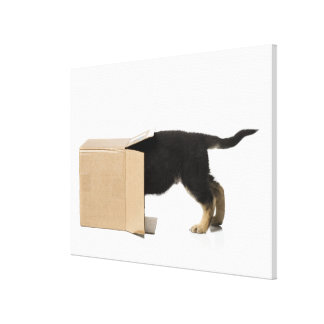 Puppy in cardboard box canvas print