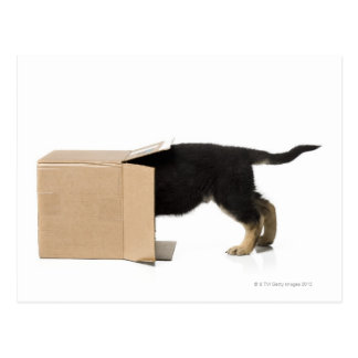 Puppy in cardboard box postcard