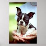 Puppy In Hands Print