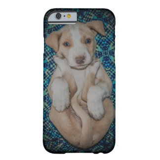 Puppy in Peru Barely There iPhone 6 Case