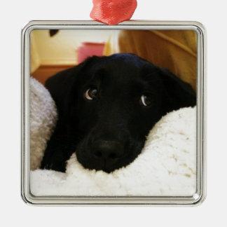 puppy.JPG inocente Adorno Cuadrado Plateado