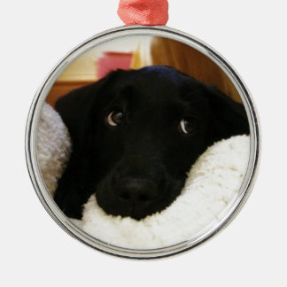 puppy.JPG inocente Adorno Redondo Plateado