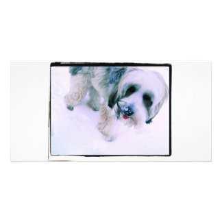 Puppy Kisses Cute Dog Card Picture Card