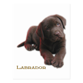 Puppy Lab Postcard