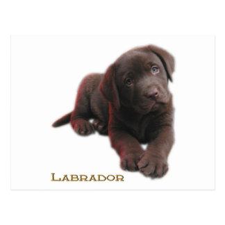 Puppy Lab Postcard