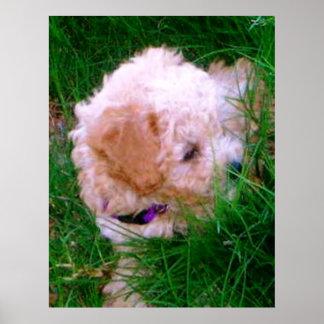 puppy lita in the grass poster