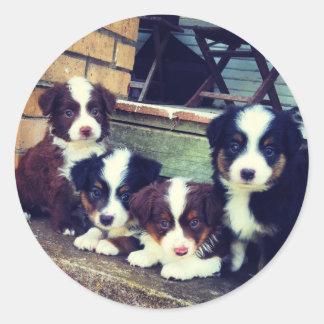 Puppy Love - Adorable  Australian Shepherds Classic Round Sticker