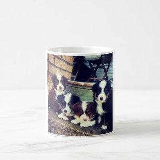 Puppy Love - Adorable  Australian Shepherds Coffee Mug