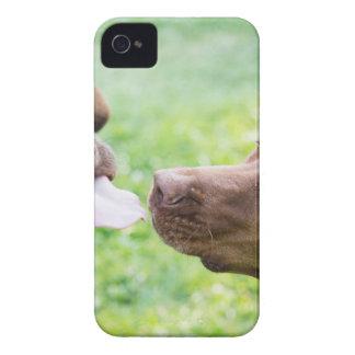 Puppy love Case-Mate iPhone 4 case