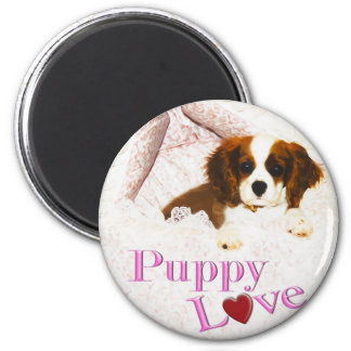 Puppy Love Cavalier King Charles Spaniel Magnet
