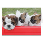 Puppy Love customizable card