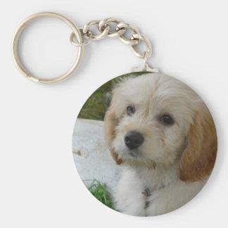Puppy Love - Cute MaltiPoo Dog Photo Basic Round Button Keychain