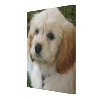 Puppy Love - Cute MaltiPoo Dog Photo Gallery Wrapped Canvas