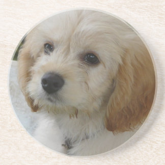Puppy Love - Cute MaltiPoo Dog Photo Coaster