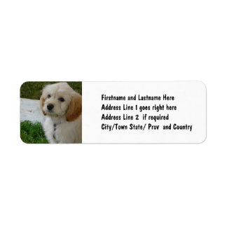 Puppy Love - Cute MaltiPoo Dog Photo Label