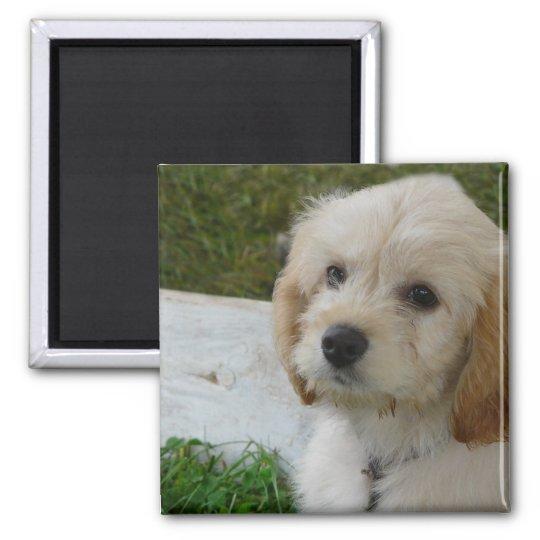 Puppy Love - Cute MaltiPoo Dog Photo Magnet