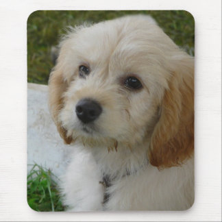 Puppy Love - Cute MaltiPoo Dog Photo Mouse Pad