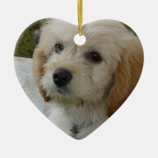 Puppy Love - Cute MaltiPoo Dog Photo Ornament