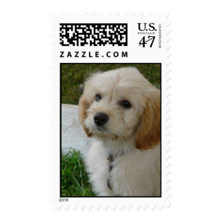 Puppy Love - Cute MaltiPoo Dog Photo Postage