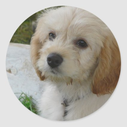 Puppy Love - Cute MaltiPoo Dog Photo Round Sticker