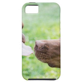 Puppy love iPhone SE/5/5s case