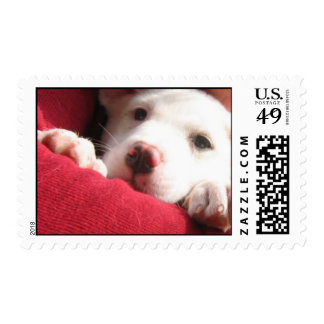 puppy love postage stamps