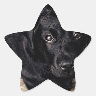 puppy love star sticker