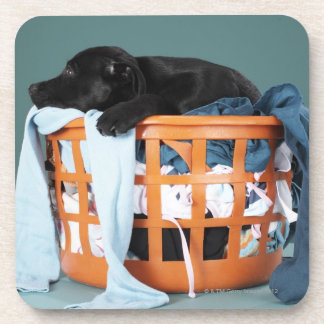 Puppy lying in laundry basket beverage coaster