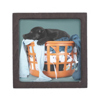 Puppy lying in laundry basket gift box