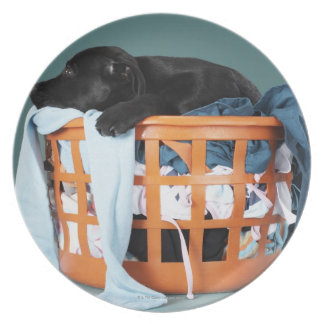 Puppy lying in laundry basket dinner plate