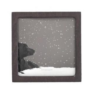 Puppy lying in snow watching snowflakes keepsake box